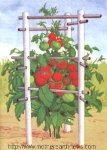 Опора для помидор фото
