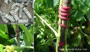 крепление растений