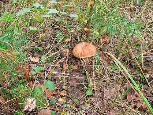 в поиске грибов