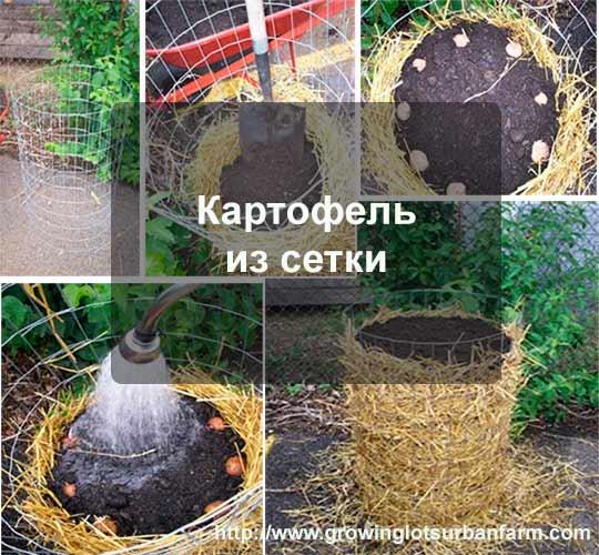 картофель из сетки