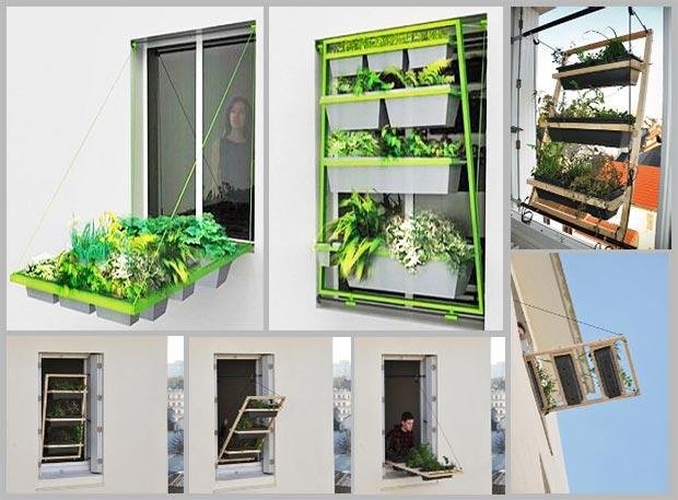 выращивание растений на подоконнике