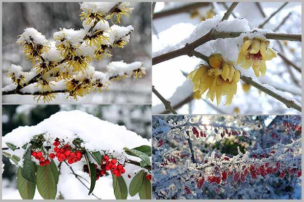 зимнего ландшафтного интерьера