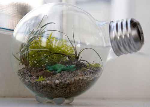 террариум из лампы