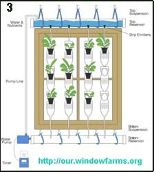 Огород на подоконнике