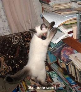 Уголок для кошки