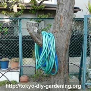 в вашем саду дерево
