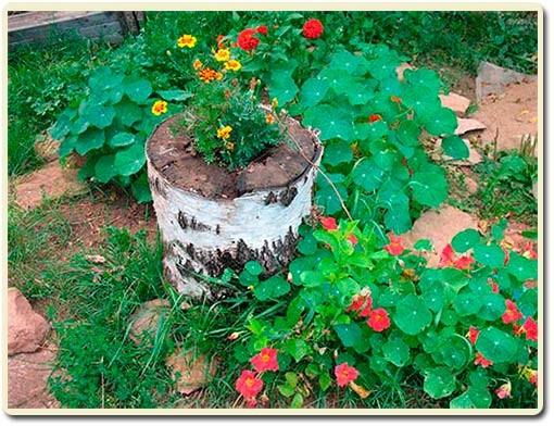 растительная флористика