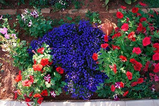 декорирование участка цветами