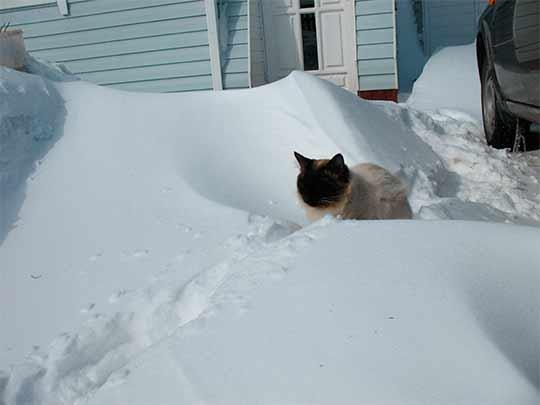лежит снег