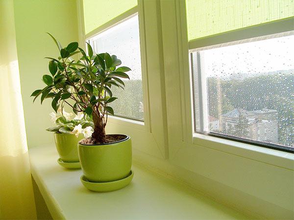 популярные окна