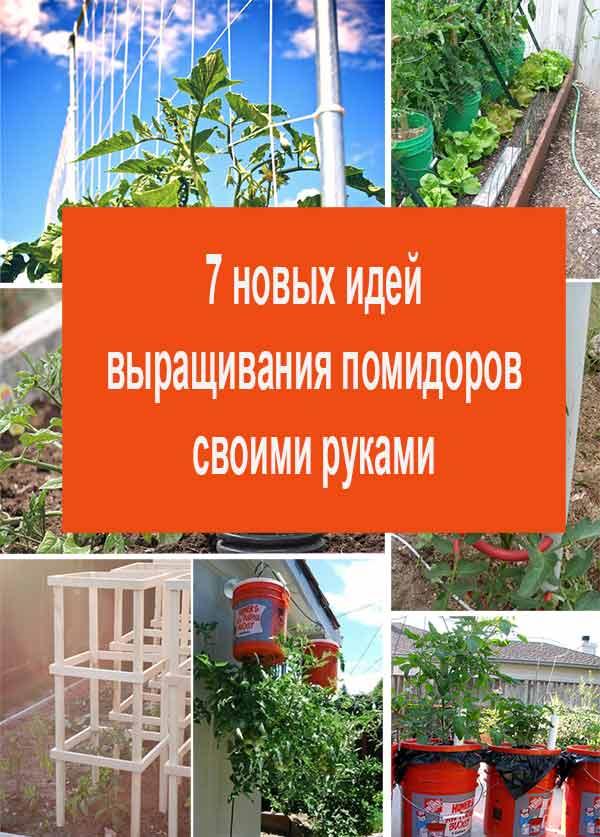 выращивания помидоров своими руками