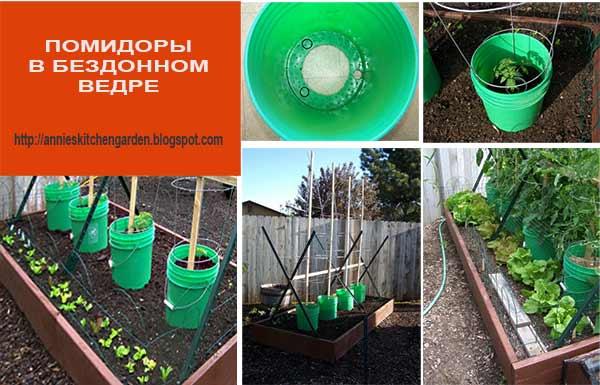 помидоры в ведре