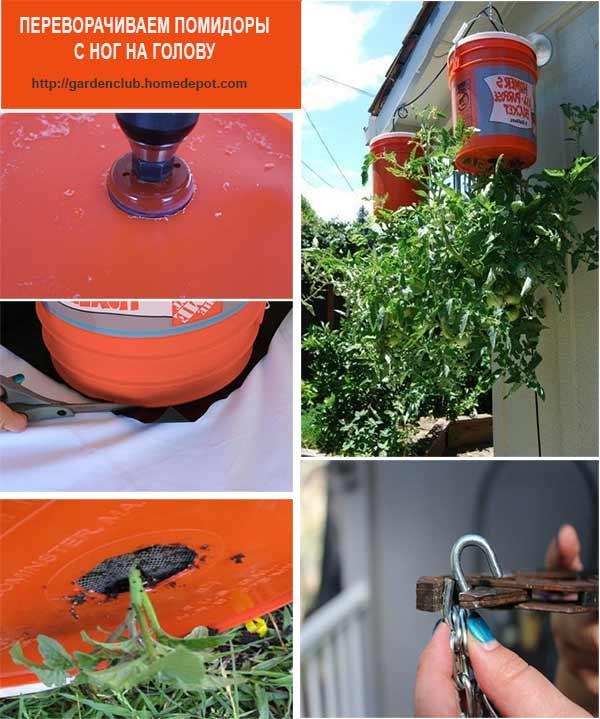 выращивание помидоров в перевернутом виде