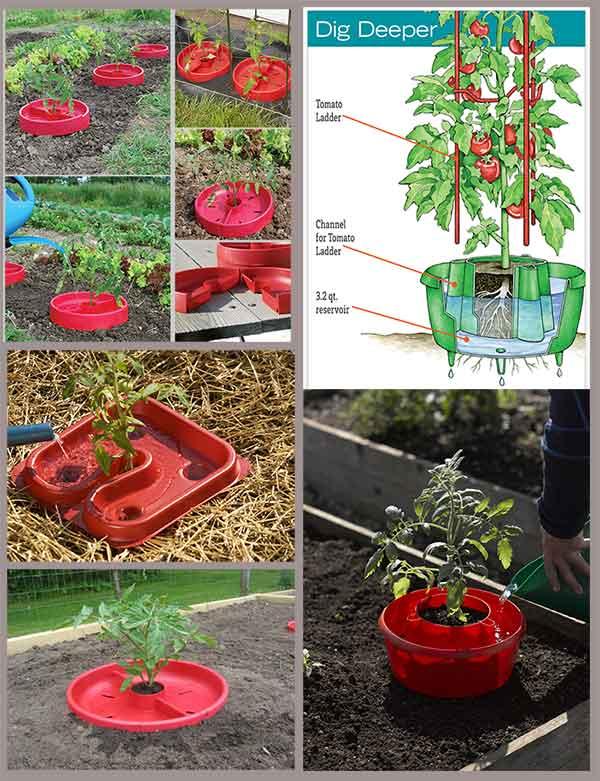 приспособления для полива помидоров