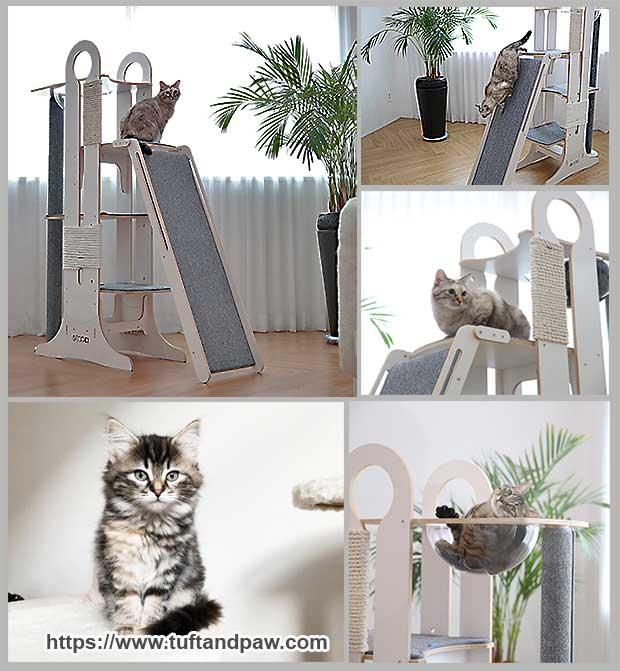 тренажер для кошки