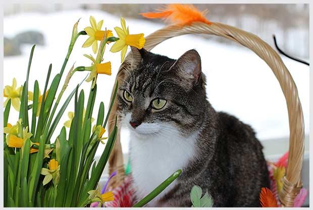кошки и растения в интерьере
