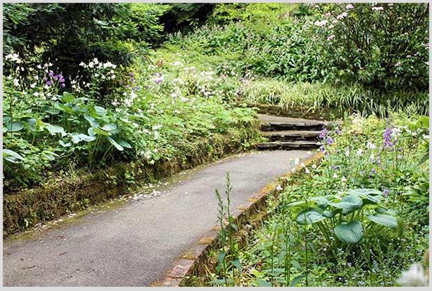 злаковые сады