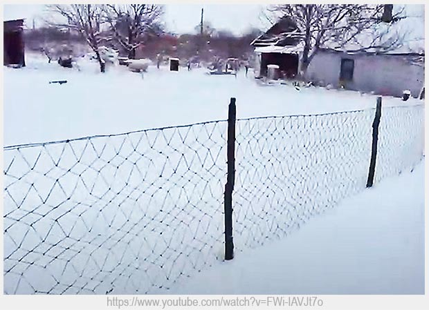 забор из пет-ленты